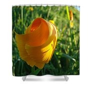 Contemporary Orange Poppy Flower Unfolding In Sunlight 10 Baslee Troutman Shower Curtain