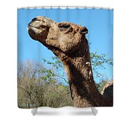 Contemptuous Camel Shower Curtain