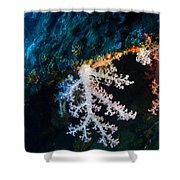 Contrasting Coral Shower Curtain