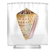 Conus Leopardus Shell Shower Curtain