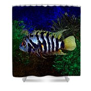 Convict Cichlid Fish Shower Curtain
