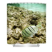 Convict Tang Shower Curtain