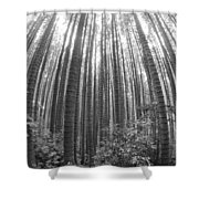 Cook Pines Shower Curtain