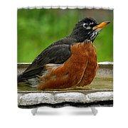 Cool And Cautious Shower Curtain