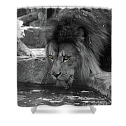 Cool Drink Of Water  Black And White  T O C Shower Curtain