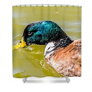 Cool Off The Bill Shower Curtain