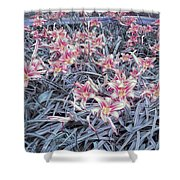Cool Sunset Field Of Tiger Lillies Shower Curtain