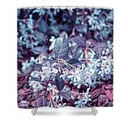 Cool Sunset Jasmine In Bloom Shower Curtain