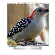 Cool, Woodpeckers Like Sunflower Seeds Shower Curtain