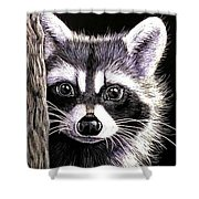 Coon Shower Curtain by Janet Moss