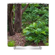 Coontie  Florida Arrowroot Or Indian Breadroot Shower Curtain