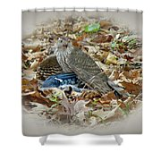 Cooper's Hawk - Accipiter Cooperii - With Blue Jay Shower Curtain