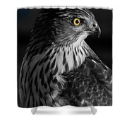 Coopers Hawk Bw Shower Curtain
