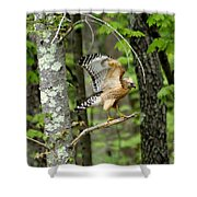 Coopers Hawk In New Hampshire Shower Curtain