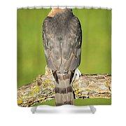 Cooper's Hawk In The Backyard Shower Curtain