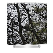Cooper's Hawk Perched In Tree Shower Curtain