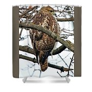 Coopers Hawk Winter Shower Curtain