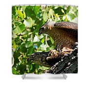Cooper's Hawks Mating Shower Curtain