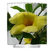 Copa De Oro Shower Curtain