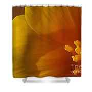 Copa De Oro - Subdued  Shower Curtain