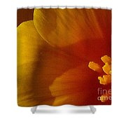 Copa De Oro - Vibrant Shower Curtain
