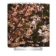 Copper Beech Shower Curtain