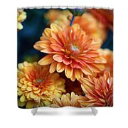 Copper Mums Shower Curtain