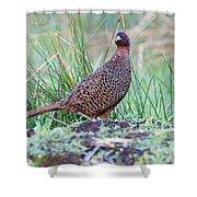 Copper Pheasant Shower Curtain