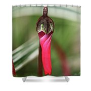 Coquettish Cyclamen Shower Curtain