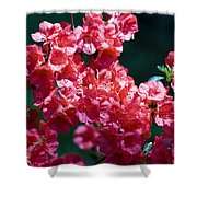 Coral Azaleas Shower Curtain