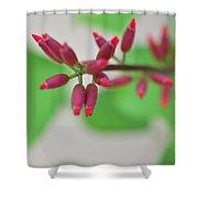 Coral Bean Plant Shower Curtain