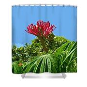 Coral Bush Jatropha Multifida With Flower And Fruit Shower Curtain