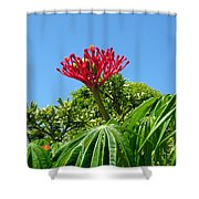 Coral Bush With Flower And Fruit Shower Curtain