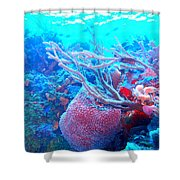 Coral Candy Shower Curtain