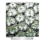 Coral Close Up  Shower Curtain by Lanjee Chee