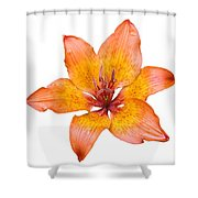 Coral Colored Lily Isolated On White Shower Curtain