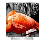 Coral Creation Shower Curtain