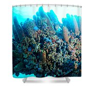 Coral Crossbeam Shower Curtain