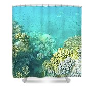Coral Shower Curtain by Debbie Cundy