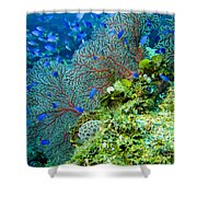 Coral In Truk Shower Curtain
