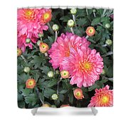 Coral Mums 2 Shower Curtain
