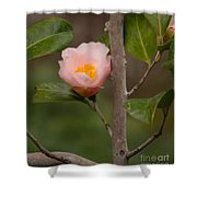 Coral Camellia 1 Shower Curtain