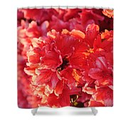 Coral Pink Azaleas Shower Curtain