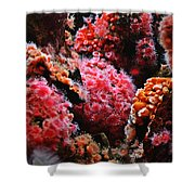 Coral Polyps Shower Curtain