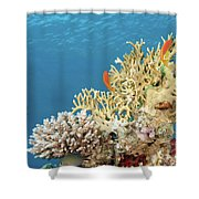 Coral Reef Eco System Shower Curtain