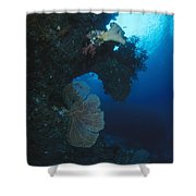 Coral Reef Wall With Seafan And Hard Shower Curtain