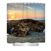 Coral Rock Shower Curtain