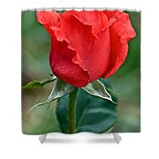 Coral Rosebud At Pilgrim Place In Claremont-california   Shower Curtain