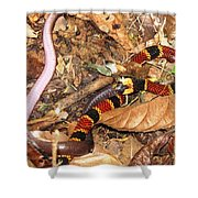 Coral Snake Snack Shower Curtain
