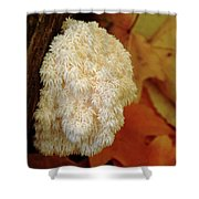 Coral Tooth Shower Curtain